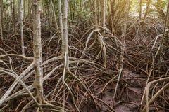 Bomenwortels royalty-vrije stock afbeeldingen