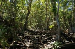 Bomenwortels in tropische wildernis royalty-vrije stock afbeelding