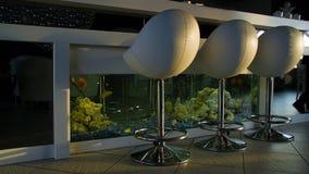Bomma för räknaren med stolar i tom bekväm restaurang med akvariet Vita stångstolar står nära en vit stångräknare royaltyfri fotografi