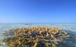 Bommie di corallo Fotografia Stock Libera da Diritti