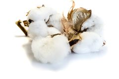 Bomull som isoleras på vit bakgrund royaltyfria foton