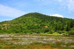 Bomullsgräs och berg Royaltyfri Fotografi