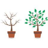 Bon et mauvais arbre, illustration Images libres de droits