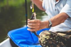 Bon loquet Perche attrapée par pêcheur sur la rotation Image libre de droits