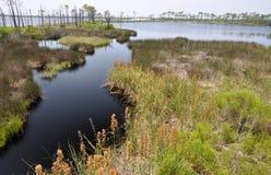 Free Bon Secour National Wildlife Refuge Royalty Free Stock Image - 14856006