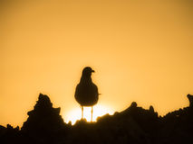Bonaire - bird Royalty Free Stock Photo