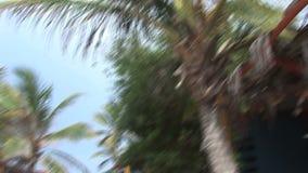 Bonaire island stock footage