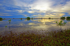 Bonaire lake Royalty Free Stock Photography