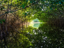 Bonaire - Mangroves. The Mangroves of Lac Bay and Bakuna Bonaire Durch Caribbean stock images