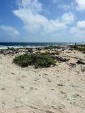 Bonaire Stock Image