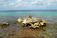 Bonaire shoreline Stock Images