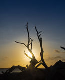 Bonaire sunset Stock Image