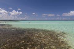 Bonaire wyspy morze karaibskie windsurf laguna Sorobon Obraz Stock