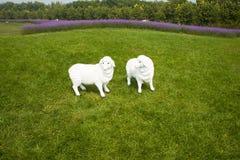Bonariensis de verveine, pelouses, moutons de bande dessinée Photographie stock
