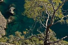 Bonassola, cerca de Cinque Terre Una peque?a planta del pino en los acantilados del mar fotos de archivo