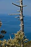 Bonassola, dichtbij Cinque Terre, Liguri? Een dode boomboomstam tegen de achtergrond van het overzees van het Vijf Land royalty-vrije stock fotografie