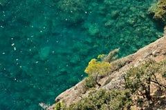 Bonassola, perto de Cinque Terre Uma planta pequena do pinho nos penhascos do mar fotografia de stock