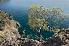 Bonassola, perto de Cinque Terre Uma planta pequena do pinho nos penhascos do mar foto de stock royalty free