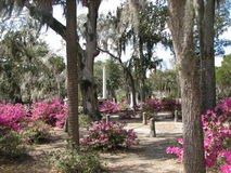 Bonaventure Cemetery Royalty Free Stock Images