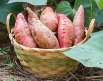 bonbon à pomme de terre images libres de droits