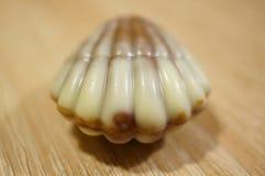 Bonbon de coquillage Image stock