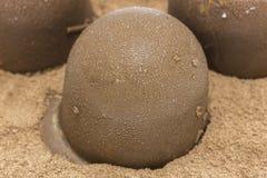 Bonbon der Schokolade Lizenzfreie Stockfotografie