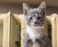 Bonbon ein Kätzchen aalt sich nahe einem warmen der alte Heizkörper lizenzfreie stockfotos
