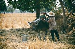The bond between man and buffalo Royalty Free Stock Photos