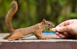 Bond with nature stock photography