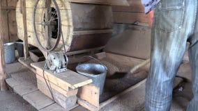 Bondaktig siktat korn för arbetare skopa med skyffeln som belägger med metall hinken arkivfilmer