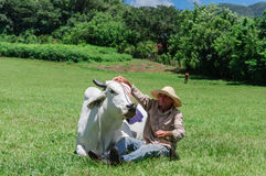 Bonde With Cow Arkivfoton