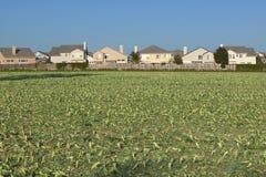 Bonde fält med kantjusteringar arkivbild