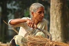 Bonde för gammal kvinna i Bangladesh arkivbilder
