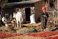 Bonde för kvinna för PA-`-nolla, Myanmar Arkivbild