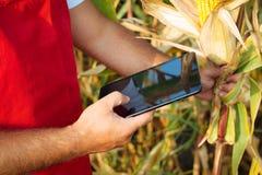 Bonde i cornfield genom att använda den elektroniska minnestavlan Arkivfoto