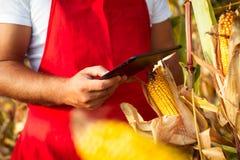 Bonde i cornfield genom att använda den elektroniska minnestavlan Arkivbilder