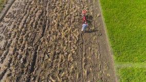 Bonde i risfältet indonesia arkivfilmer