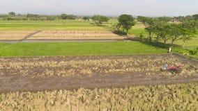 Bonde i risfältet indonesia stock video