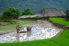 Bonde med buffeln på risfält Arkivfoton