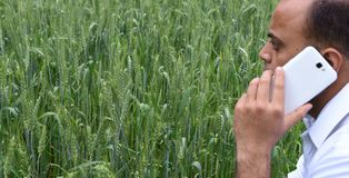Bonde med den smarta telefonen som är främst av hans frodiga gröna vetelantgård Arkivfoto