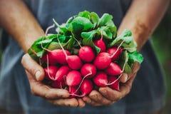 Bonde med grönsaker arkivbilder