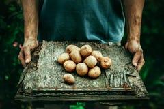 Bonde med potatisar Arkivfoto