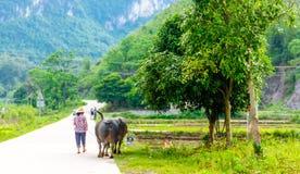 Bonde med vattenbuffeln i Karstlandskap vid Yangshuo arkivfoto