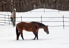 Bonde och häst royaltyfria bilder