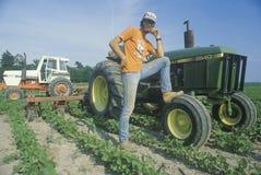 Bonde som ansar till soybeans vid en traktor Arkivbilder