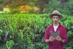 Bonde som använder den digitala minnestavladatoren i kultiverad kaffefältkoloni arkivfoto