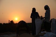 Bonde som arbetar i en risfält i solnedgång Arkivfoto