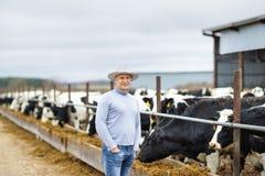 Bonde som arbetar på lantgård med mejerikor Fotografering för Bildbyråer