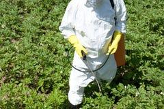 Bonde som besprutar det giftliga bekämpningsmedlet eller insekticid i grönsakträdgården fotografering för bildbyråer