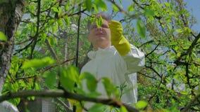 Bonde som besprutar träd med kemikalieer i fruktträdgård lager videofilmer